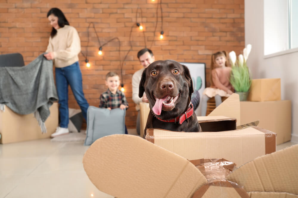 Top Tips For Moving Home With A Dog
