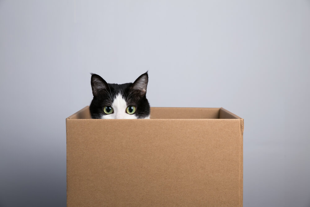 Tips For Moving Home If You Have A Cat